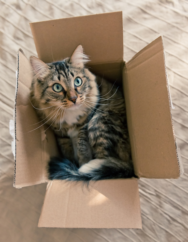 How Many Cats Can You Put In An Empty Box : empty, Check, Empty, Boxes, Around, House.