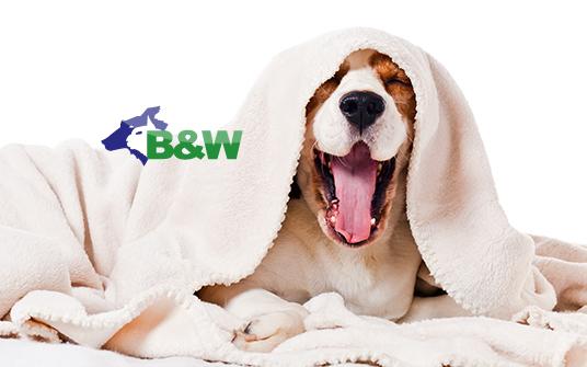 幫狗狗洗澡~你洗對了嗎? – 淞運泰-寵物悄悄話