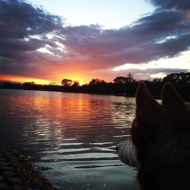 Watching the sunset with #Arya #Plovdiv