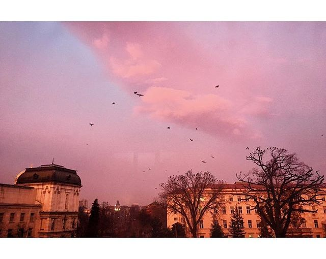 Pink sunrise. Also birds. They gather each morning on the tall threes at the University Botanical Garden, then fly away in flocks and turn the sky black. #Sofia #sunrise #vscocam #sky
