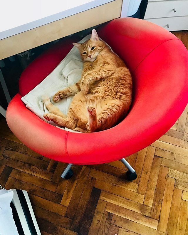 #Drafted March 2017. When a cat loves a chair. Petko's taken ownership of the fading red and makes sure we know it 😋 #catsofinstagram #Bulgaria #Troyan #gingercat #funnycat #latergram