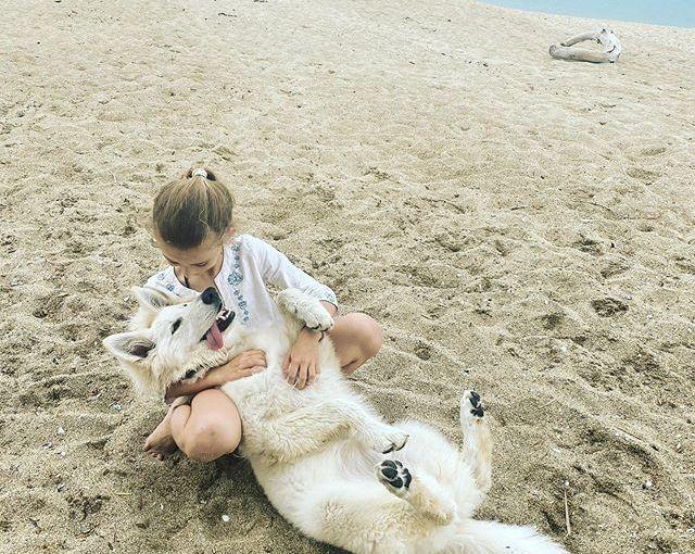Любов 2. #Bulgaria #Sinemorets #whiteswissshepherd #puppylove #swissshepherdpuppy #swissshepherd #bergerblancsuisse #bergerblancsuissepuppy #bergerblancswiss #puppiesofinstagram #dogsofinstagram #beachpuppy