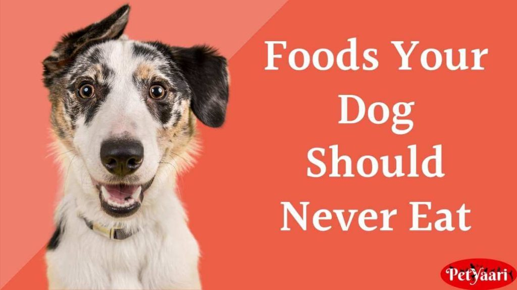 Poisonous and Dangerous Foods Your Dog Should Never Eat