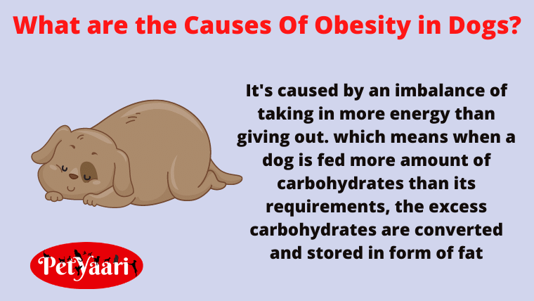 What are the Causes Of Obesity in Dogs