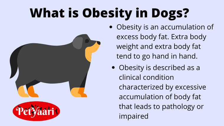 What-is-Obesity-in-Dogs