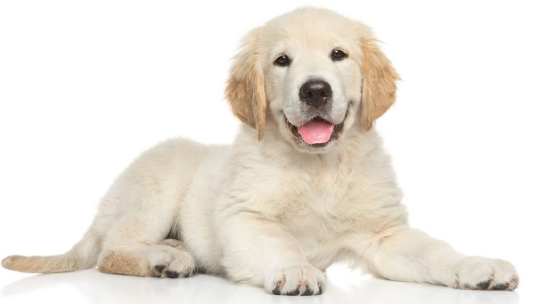 Age of Puberty in dogs