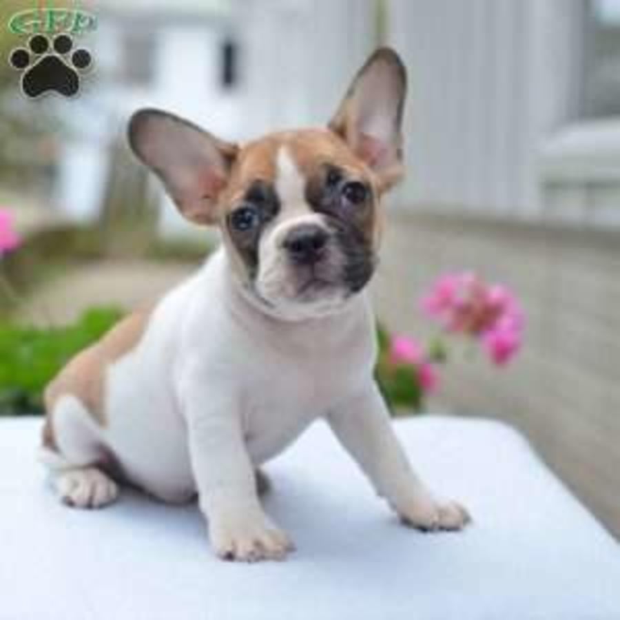 Mixed Breed Puppies For Sale In Ohio United States Petzdaddy
