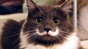 63 neverovatne činjenice o mačkama