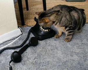 Mačka zove Hitnu pomoć