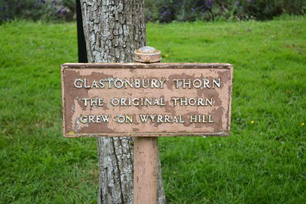 glastonburythorn2