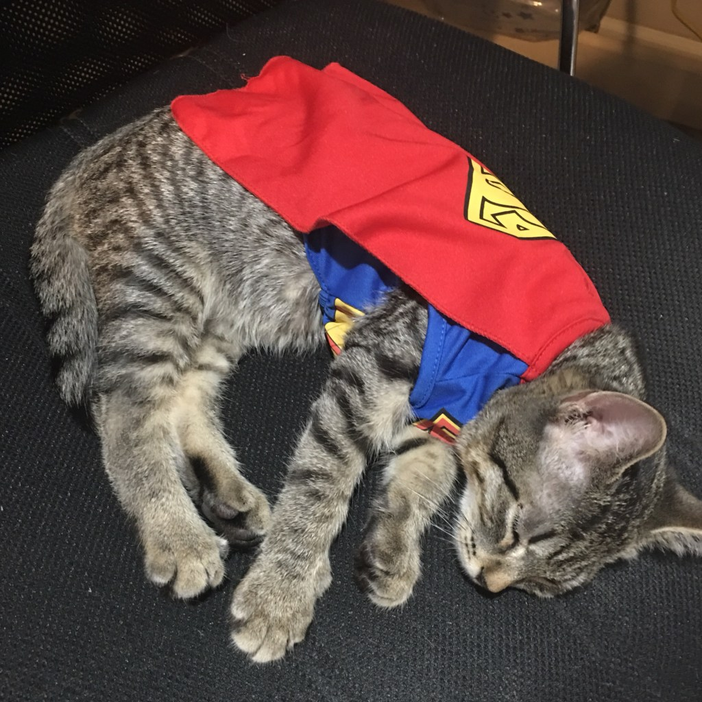 Jinx a 4 month old silver tabby sleeping in his super man costume