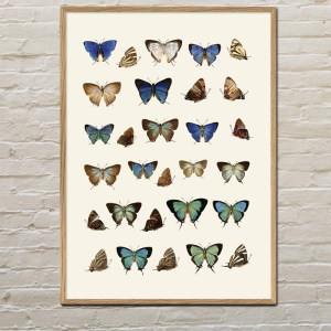 Insectum Butterflies