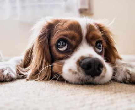 Trauer um unser Haustier