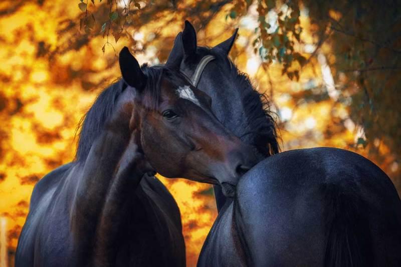 Pferde im Sommer