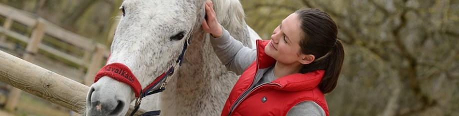 pferde-versicherung-950x241