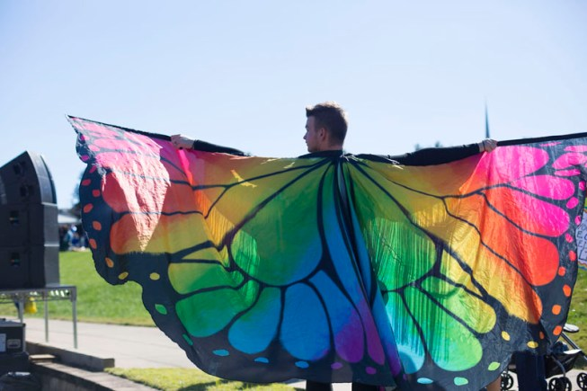 A beautiful set of rainbow buttrerfly wings.