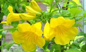 Südamerika Pflanzen kaufen