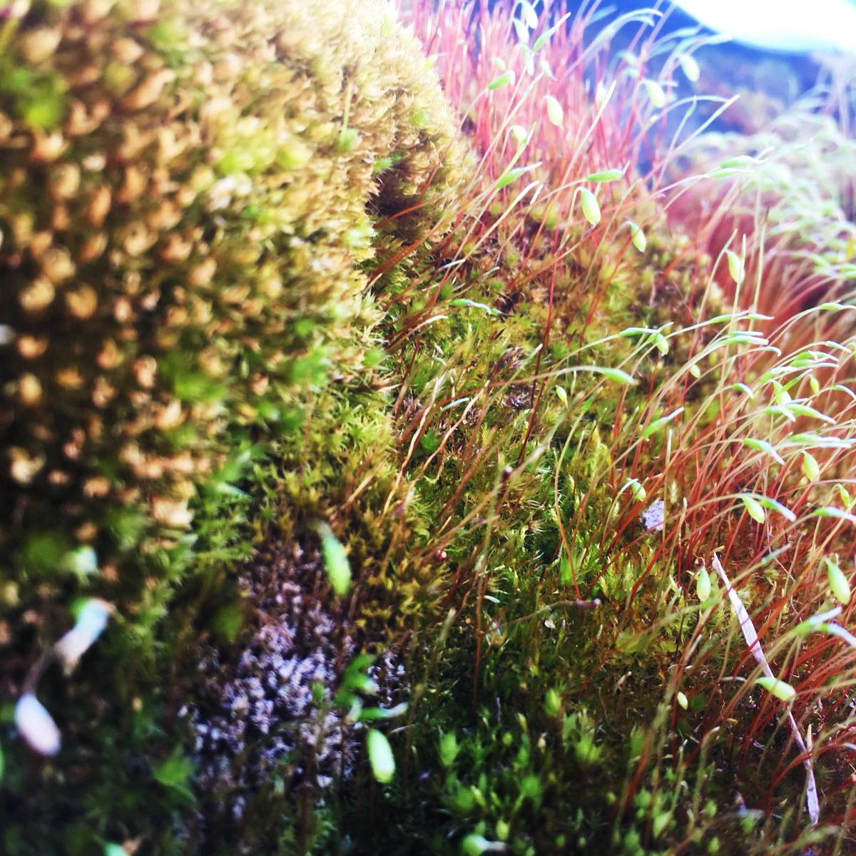 Moos Im Garten Mittel Gegen Moos Im Rasen Mittel Gegen Moos