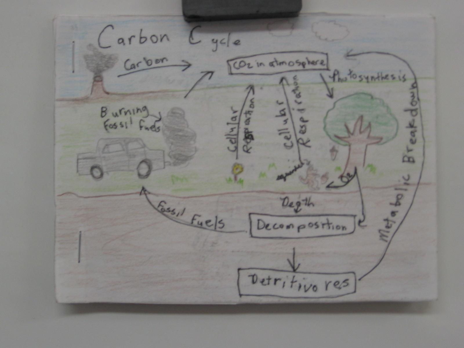 Carbon Nitrogen Cycles