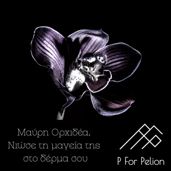 black-orchid-krema-ragadon-pforpelion