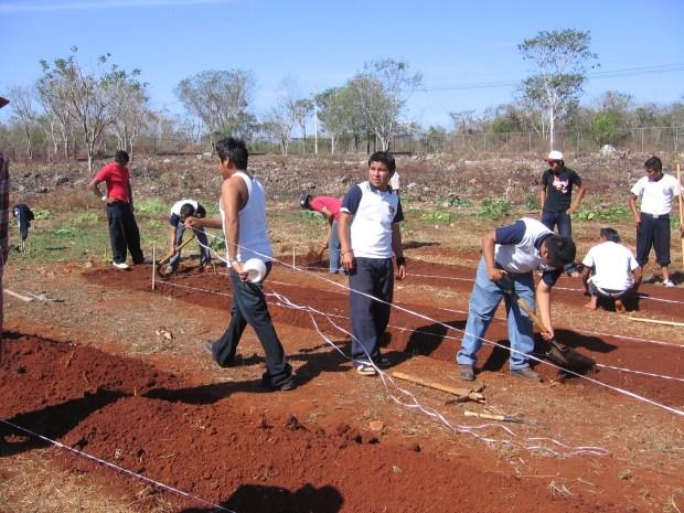 Yucatan Garden Bed Construction