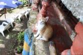 Cats at Mama Ines Hostel
