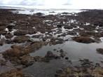 Tide Pool Exploration