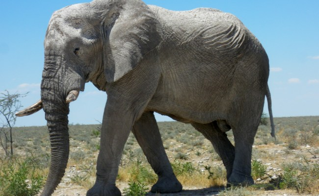 African Elephants Pgcps Mess Reform Sasscer Without