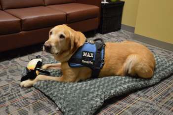 Therapy dog 'Max' relaxing with his favorite toy.