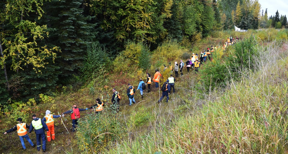 The search line stretches out along the banks of the Bowron River. Bill Phillips photo