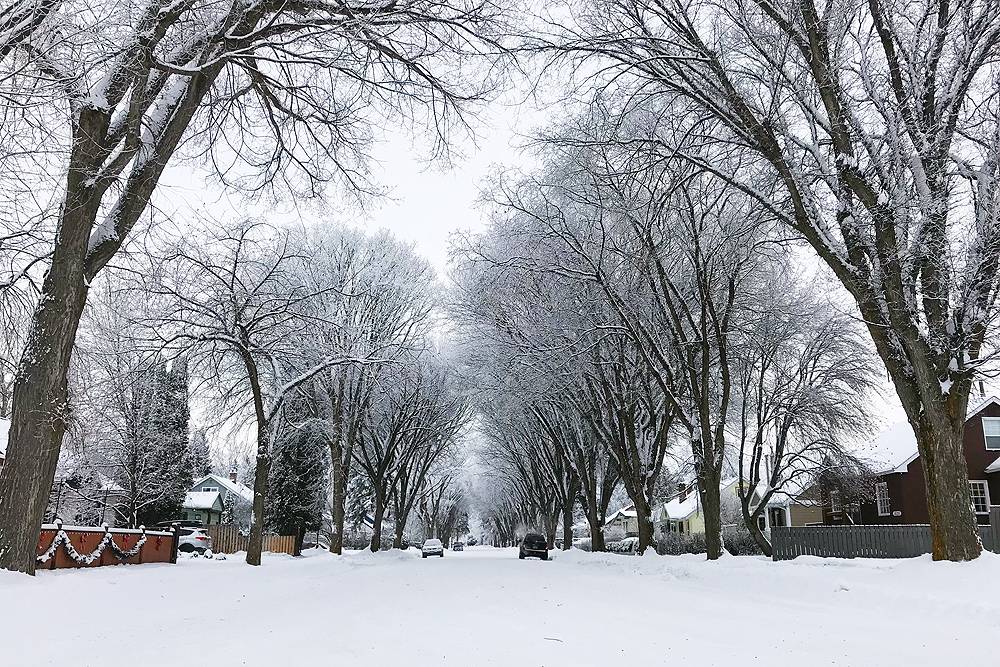 The trees on Dogwood Street (pictured) and Elm Street were recently named to the City's Heritage Register. City of Prince George photo