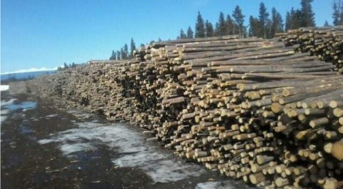 New cut level set for Lakes Timber Supply Area