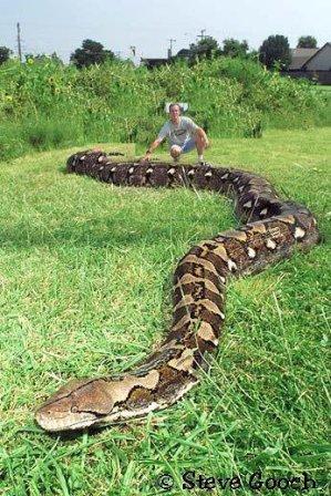 Le Serpent Le Plus Dangereux Du Monde : serpent, dangereux, monde, Serpents, Monde