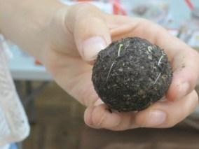 """A soil """"Seed Bomb"""""""