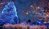 Indy Lighting Of The Tree | Decoratingspecial.com