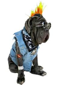 Happy Howl-oween! DIY Halloween Costumes for Dogs ...