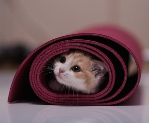 32 reasons cats are born yoga masters  spry living