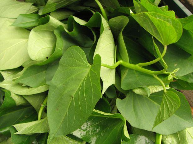 5 Kale Alternatives Spry Living