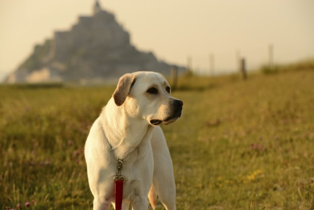 Doggy Doc: How Man's Best Friend Detects Health Problems