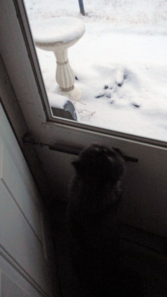 Dougy sneaks a peek at the snow out the back door.