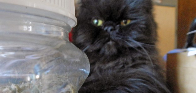 """Mmmm! A jar of catnip! I knew there was more somewhere!"""