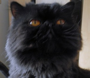 """Dougy says, """"We are not amused!"""""""