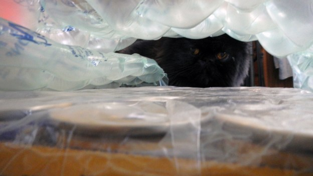 Peek-a-boo! Dougy examines the bubble-wrapped flats.