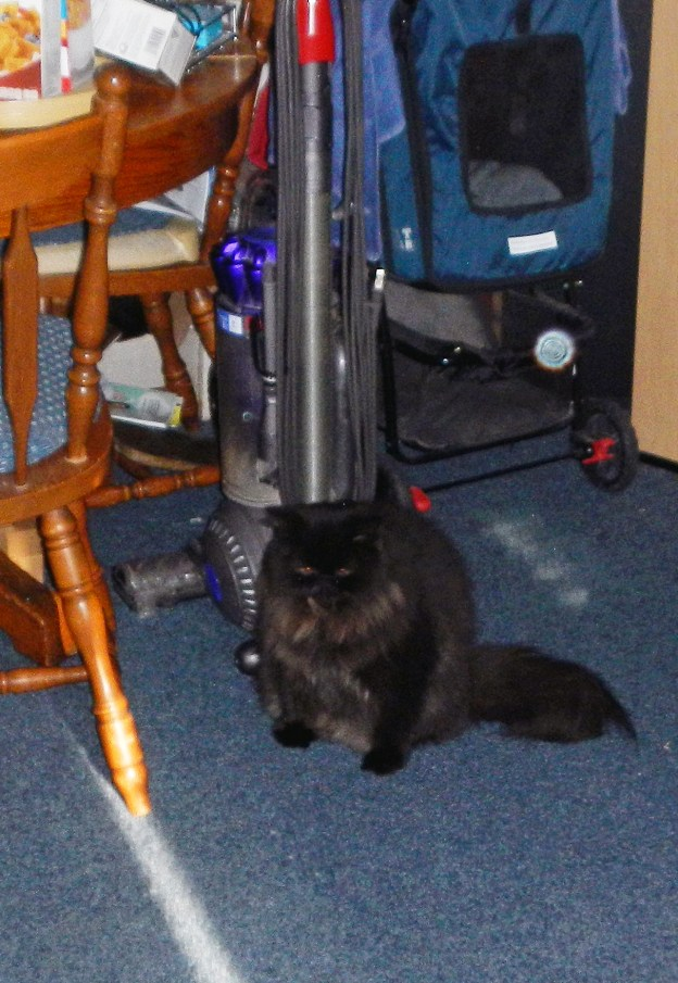 """well, he found the messiest corner of the apartment to plop down. Or one of the messiest. And it's dark there. """"Black-cat-in-the-coal-bin-in-the-basement"""" dark."""