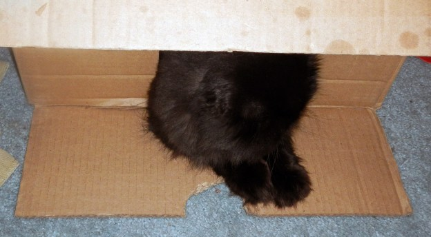 "Dougy, on the other hand, is ready to go! [Hint! Hint!] Here, he's hiding in that box by the wastepaper basket across from my computer table. ""Nearby"", if you didn't follow the description."