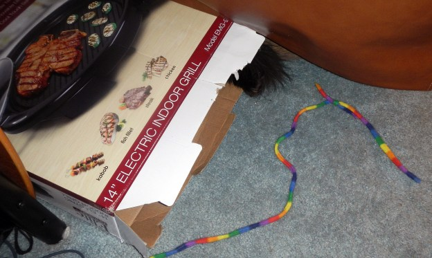 Definitely a cat tail!  And the cat in the box was playiong that game the boys play with that wand toy, the one with strange rules I can't discern that always ends up in them chasing each other all over the house, leaving the wand toy where the game started.