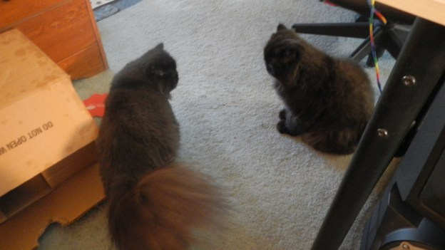 Dougy (left side) sees Andy has a cattitude on...