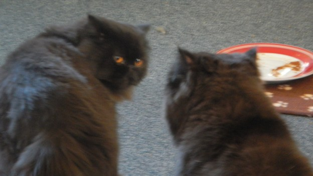 """""""Maybe I can stare him down,"""" Dougy thinks."""