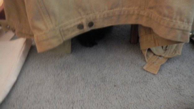 """It's a cruel world,"" Dougy thinks, and he cowewrs under the chair until Andy's left the room."