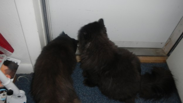 It started like all snow adventures, with the boys crowding the door for a peek outside...!